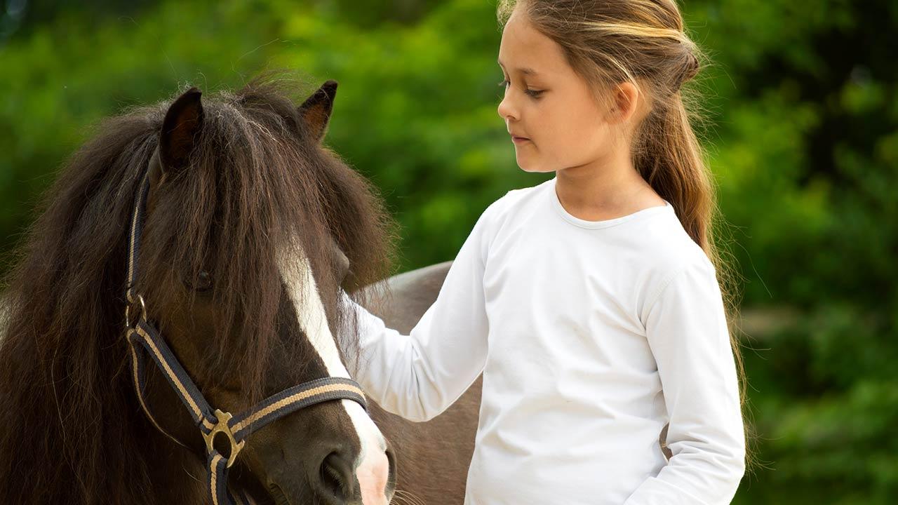 Dyreassisteret terapi med børn, der har en usikker tilknytning